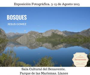 cartel-de-la-exposicion-fotografica-bosques-en-la-sala-cultural-del-benavente-en-llanes.