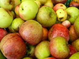 manzanas-de-sidra-casa-rural-en-llanes
