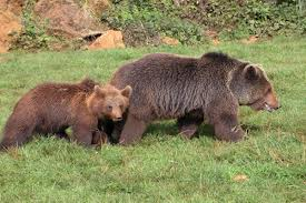 osos-en-el-parque-de-cabarceno