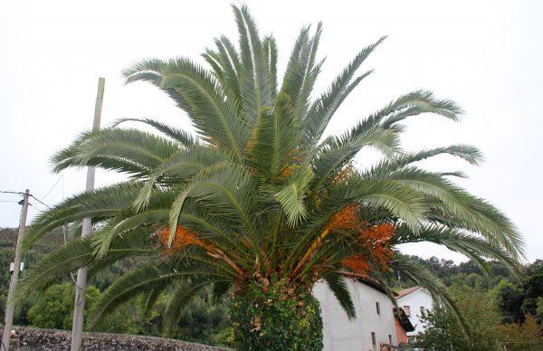 casa rural la boleta palmeras