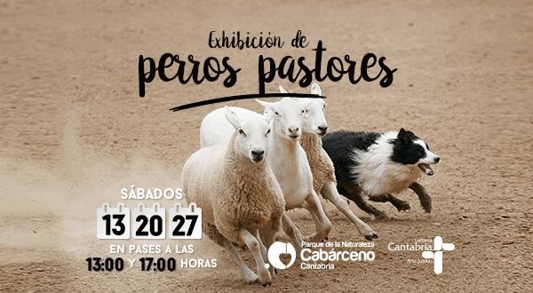 Muestra de Perros Pastores en Cabárceno. Cartel