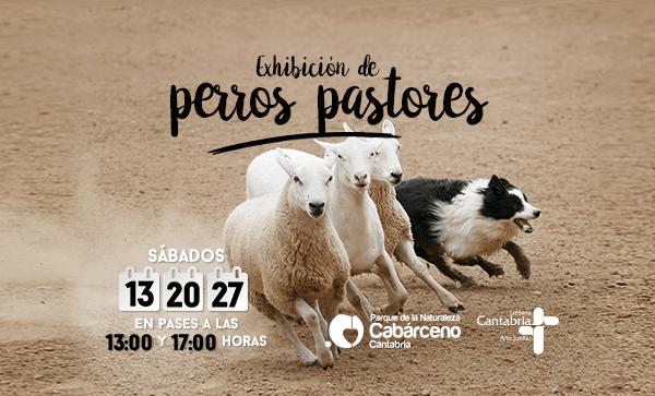 Exhibición de Perros Pastores en Cabárceno. Cartel